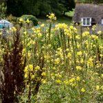 Overgrown walled kitchen garden